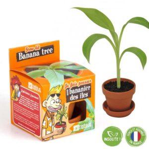 Graines de bananier à faire pousser – Pot 8 cm