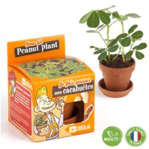 Graines de cacahuètes à faire pousser – Pot 8 cm