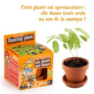 Graines de plante qui danse à faire pousser – Pot 8 cm